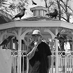 eddy detroit-black crow gazebo lp