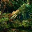elysia crampton-moth/lake 7