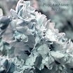 various-pop ambient 2017 cd
