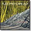 orchid spangiafora-flee past's ape elf 2 LP